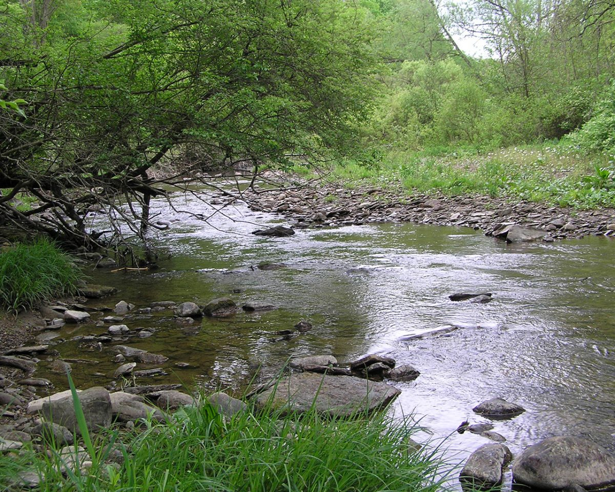 Chautauqua Creek Oxbow Forest Preserve