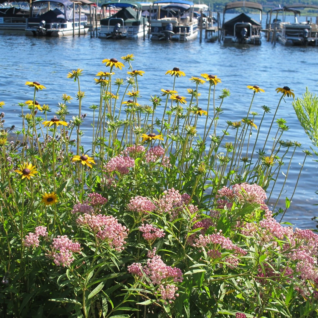 A Homeowner's Guide To Lake Friendly Living!